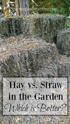 Hay vs. Straw in the Garden: Which is Better? Everyone tells me my choice is wrong until they hear out my reasoning and method!