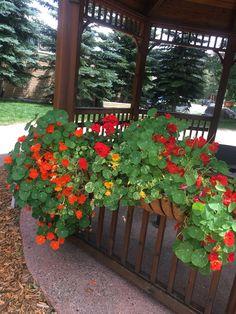 Asi las flores....!!!..Colorado