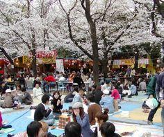 http://www006.upp.so-net.ne.jp/f1f1f1/2008-03-29-sakura-matsuri.htm