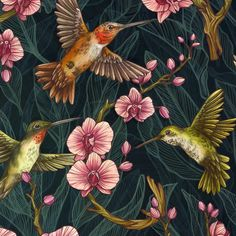 HUMMINGBIRD PATTERN - Kate O'Hara Illustration