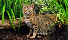 fancy feast cat breed | Cute Cats Pictures