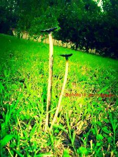 Hongos: quinta de Junin Buenos Aires 2012 #juninbuenosaires #naturaleza #buenosaires  #concursodefotografia #fotoamateur #fotoaficionado #participaygana #fotografos #fotografia #concurso #arte #photographers #imagen