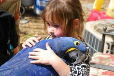 The Hyacinth Macaw, is a parrot native to central and eastern South America. It is the largest macaw and the largest flying parrot species, Animals For Kids, Animals And Pets, Baby Animals, Funny Animals, Cute Animals, Animal Memes, Cute Birds, Pretty Birds, Beautiful Birds