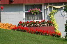 Brightly-colored plants and other decorative elements help disguise what would otherwise be an ugly wall. Get further ideas for landscape color schemes here: http://landscaping.about.com/od/designexamples1/ig/Landscape-Color-Schemes/