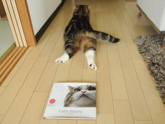 maru. This book may be added to my book collection soon enough :)