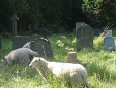 Sheep graze in a Dunwich cemetery in England. Goblin, Forest Fairy, Photo Dump, Looks Cool, Faeries, Cemetery, Ethereal, Overlays, Creatures