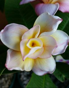 Scott C. 10 petal bloom!!