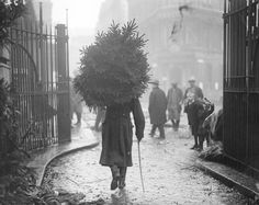 Taking the Tree home, Chelsea, London c.1915