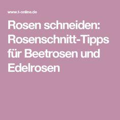Rosen schneiden: Rosenschnitt-Tipps für Beetrosen und Edelrosen