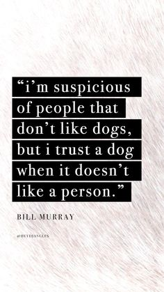 """""""Im suspicious of people that dont like dogs but I trust a dog when it doesnt like a person"""" - Bill Murray. Cute Dog Quotes, Dog Lover Quotes, Dog Lovers, Funny Quotes, Life Quotes, Status Quotes, Quotes Wallpaper For Mobile, Dog Wallpaper, Wallpaper Backgrounds"""