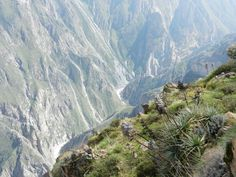 Deep into the second deepest canyon in the world: the Colca Canyon awaits you!! - http://www.peruinsideout.com/wp/destinations/peru/colca-canyon/