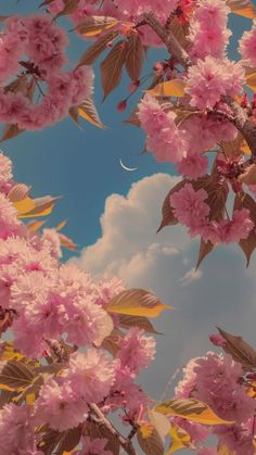 Vintage Flowers Wallpaper, Floral Wallpaper Iphone, Flower Background Wallpaper, Phone Wallpaper Images, Plant Wallpaper, Aesthetic Desktop Wallpaper, Cute Patterns Wallpaper, Scenery Wallpaper, Flower Backgrounds