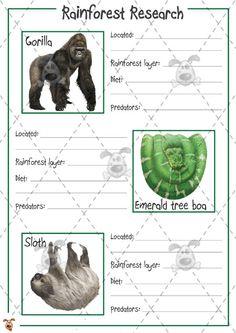 Teacher's Pet Activities & Games » Rainforest Animal Research (colour) » EYFS, KS1, KS2 classroom activity and game resources » A Sparklebox alternative