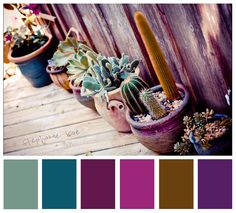 Succulents & Agaves along potting shed