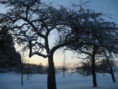 Věnujte ovocným stromům péči i v zimě