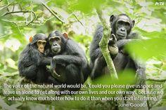 PETA-Aquarium-Feature-Quote-06-chimps