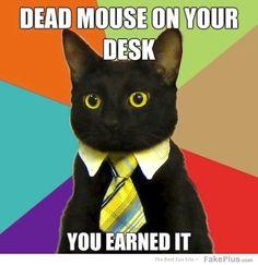 Business cat srs bsns