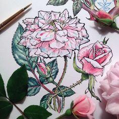 Уже очень хочется весны, цветов и теплой погоды. Зима скоро отступит, я надеюсь, а пока можно полюбоваться нежными цветами на рисунках художника Ноэля Баджеса Пью (Noel Badges Pugh). Рисунки смотрятся легко, без лишних украшений, как будто в воздухе. Как мне кажется, некоторые из них даже превосходят по красоте живые цветы.