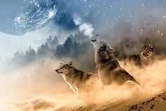 This short article relates some of the negative thought patterns that masquerade as harmless sheep. They're not! Wolf Meaning, Wolf Totem, Wolf Painting, Diy Painting, Foto Picture, Cute Dogs Images, Puppy Images, Fantasy Wolf, Dog Breeds