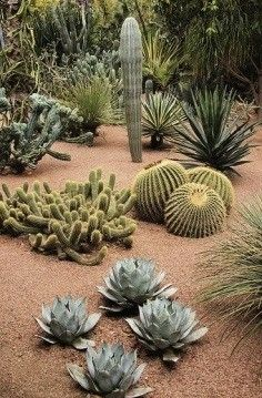 Stunning desert garden ideas for home yard 42 plants outdoor 60 Stunning Desert Garden Landscaping Ideas for Home Yard - Rockindeco Cacti And Succulents, Planting Succulents, Cactus Plants, Planting Flowers, Cacti Garden, Indoor Cactus, Cactus Art, Mini Cactus, Cactus Flower