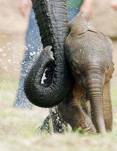 baby elephant  # Wild Elephants multicityworldtravel.com We cover the world over 220 countries, 26 languages and 120 currencies Hotel and Flight deals.guarantee the best price