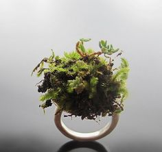 Jewellery features mini succulents, moss and soil - bague nature