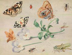 Insekten,  John van Kessel