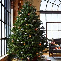 Williams Sonoma fresh blue ridge mountain Christmas tree...this tree is gorgeous...idk if it's too big for our living room tho lol. love it tho! ❤️Aff
