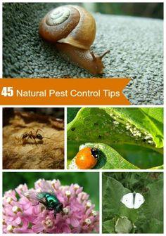 Natural Pest Control Tips