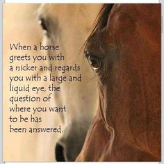 Where You Want To Be Equestrian Quotes, Equestrian Problems, Horse Riding Tips, Horse Tips, Horse Stalls, Horse Barns, Horse Training, Training Tips, Inspirational Horse Quotes