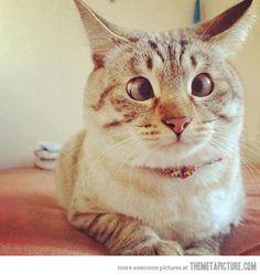Derp cat…