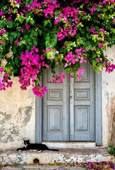 Rustic door with bougainvillea overhang Beautiful Moments, Beautiful Flowers, Beautiful Places, Old Doors, Windows And Doors, Door Gate, Garden Doors, Unique Doors, Jolie Photo