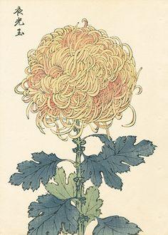 長谷川契華 Keika Hasegawa 『契花百菊 夜光玉』 Chrysanthemum Wood Block Prints 1st Edition 1893
