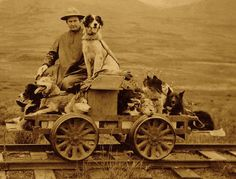 "Even sled dogs get a vacation from mushing in the winter. Yet this gentleman gave his dogs a treat when he coasted on a ""Dogmobile Trip"" from Shelton to Nome, Alaska; a photographer captured the rail cart journey on July 28, 1912."