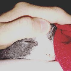 Sylvia. My princess. #cats #catsofinstagram #catsofinstagram #instacat