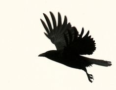 BlackBird - future tattoo but on a much smaller scale