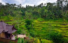Top 10 Airbnb Accommodations In Ubud, Bali | Trip101