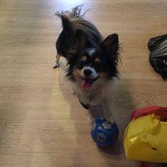 #soccer #dog #footballdog #fun by mourits84