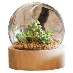 Glass Globe Medium Terrarium with Wood Base