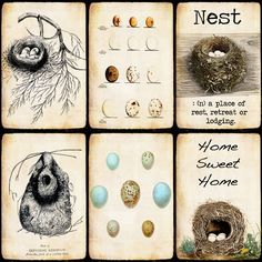 nests.. R.eminds me of you, Polly Hitt!