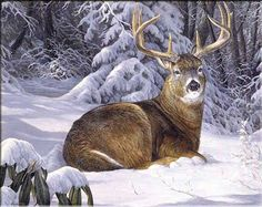 1000+ images about Art: The Whitetail on Pinterest   Wildlife ...