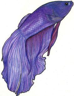 Purple Betta Drawing - MidnightTango27 © 2014 - Jan 24, 2011