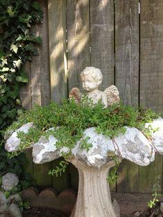 Green thumb | Shabby angel birdbath. I have done this many times at christmas…