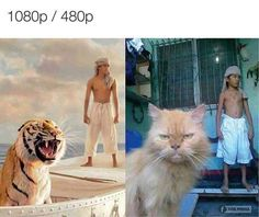Funny pictures about Life Of Pi: Nailed It. Oh, and cool pics about Life Of Pi: Nailed It. Also, Life Of Pi: Nailed It photos. Funny Bunnies, Funny Cats, Funny Animals, Funniest Animals, Fun Funny, Funny Videos, Funny Cartoons, Funny Memes, Funniest Memes