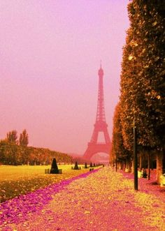 Pink Paris,if we take a chance that we might not get there at least we can view PARIS thru magnificant photograhpy! .....PINK TREES!!!!  #SpringtimeinParis  #MissKL