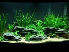 black river rock aquarium | photo caption planted tanganyikan 46 gallon bow tank description ...