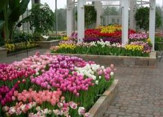 Garfield Park Conservatory and Sunken Garden is one of Indianapolis' oldest parks. This gorgeous garden is perfect for you next #event!