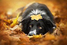 perro con cara de tristeza acostado entre hojas