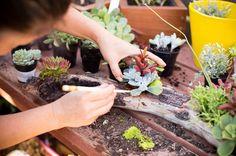 DIY driftwood succulent garden