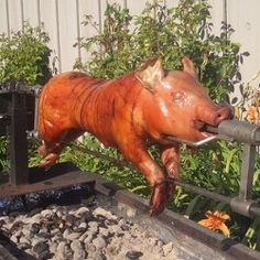Roasted Pig- Philippine National Dish.